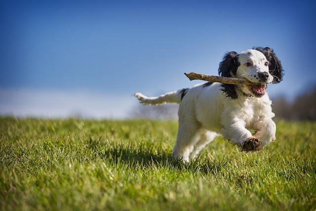 play fetch